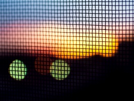 Sunset behind mesh