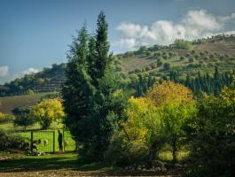 Shepherd in forest of behshahr