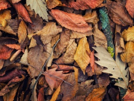 Colorful leaves-First day of autumn-Season of colors