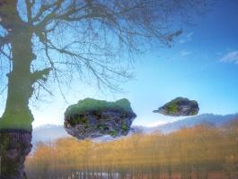 Tree, Stone, Reflection