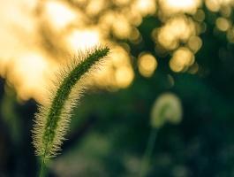 Sticky plant