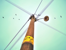 street light, wire cross, birds