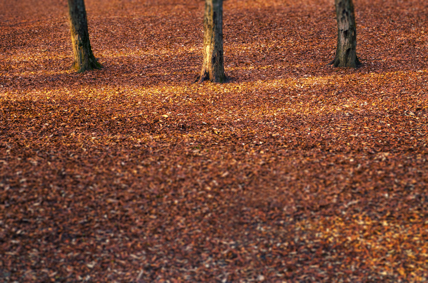 forest ground Covered with leaves