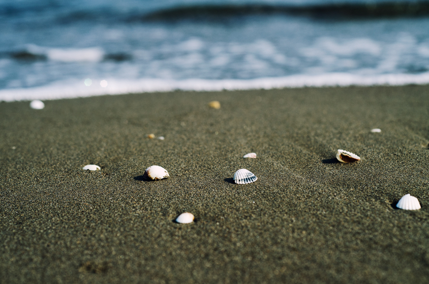 Seashells at the beach of Caspian Sea