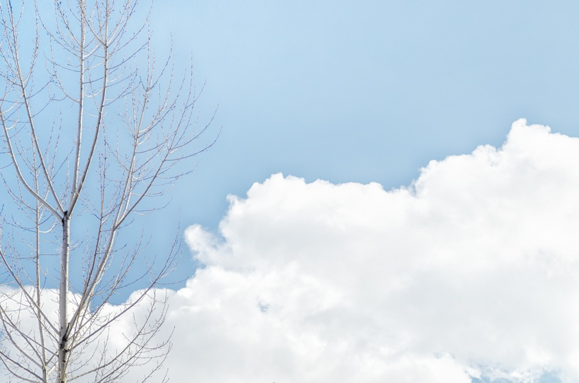 Pure sky with a tree and clouds, blue sky