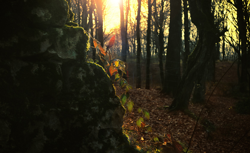 Light behind leaves, Sunset in forest
