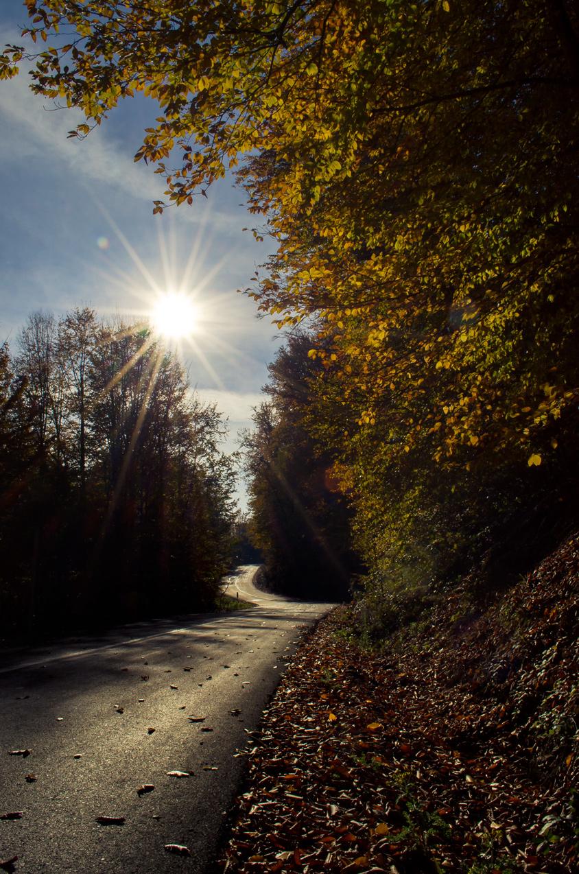 Paasand forest in autumn