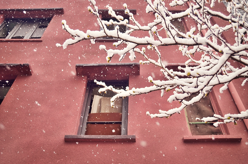 Snow on tree branches, red building