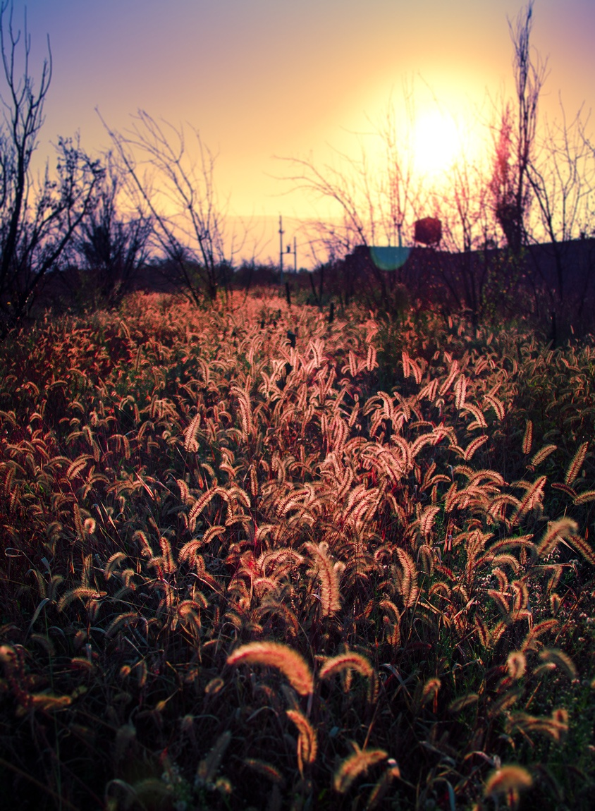 Grassland at sunset