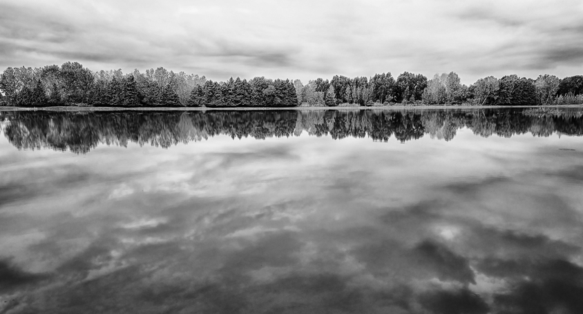 trees and clouds reflection in water