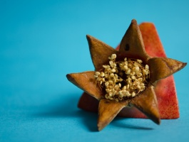 Crown of Pomegranate
