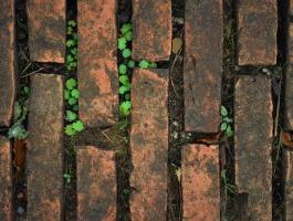 Grass growing through bricks