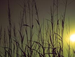 Meadow, prairie