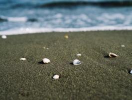 Seashells at the beach of Caspian Sea