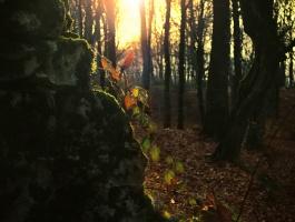 Light behind leaves