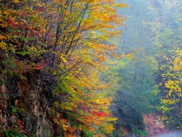Autumn, The season of colors