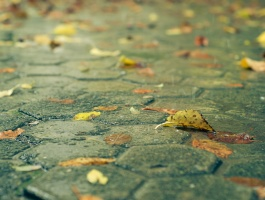 Autumn in Ekbatan
