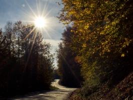 Autumn in Paasand forest