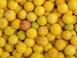 yellow lime