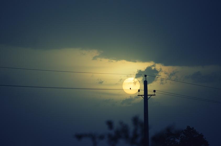Bird watching the sunset