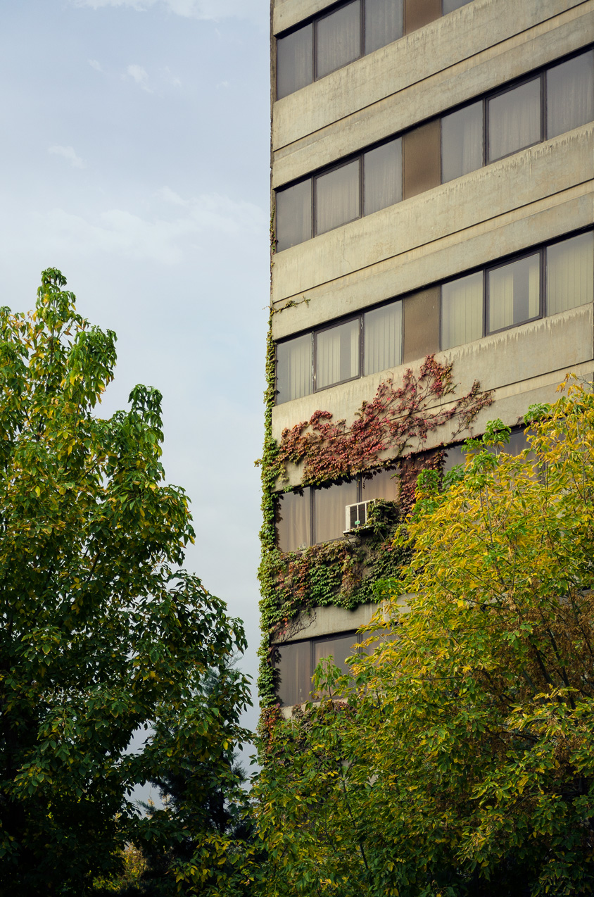 Ivy on the ekbatan skyscraper